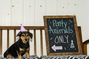 best adult party theme ideas