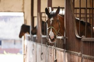 4 tips for building horse stalls